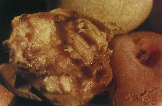 马铃薯软腐病与防治