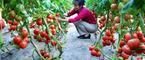 使用复合甲壳素肥料带来的三重效果