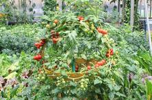 蔬菜拼成的花篮