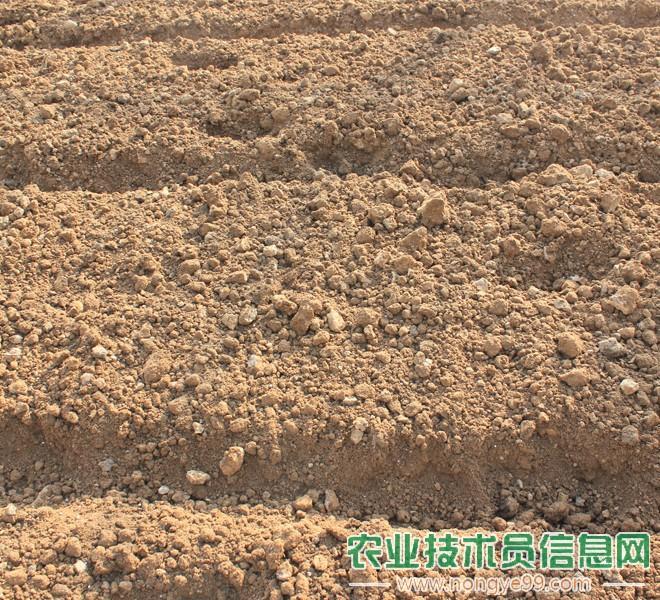 大棚土壤深耕专用机作业效果