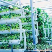 智能连栋温室育苗场景