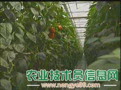 蔬菜大棚培养要重视二氧化碳的条件