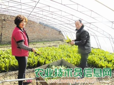 清洁工作对蔬菜生产非常重要