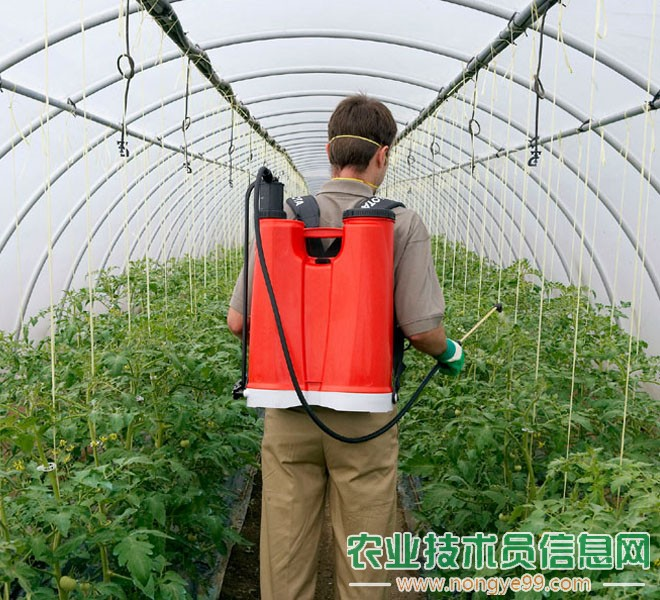 蔬菜种植中切勿盲目用要