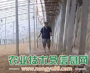 大棚换茬高温季节注意灭菌除虫