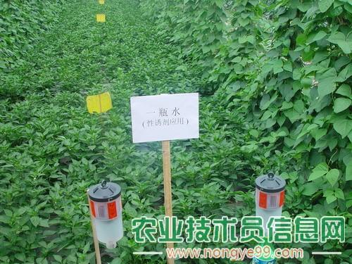 无公害蔬菜病虫害的防治措施
