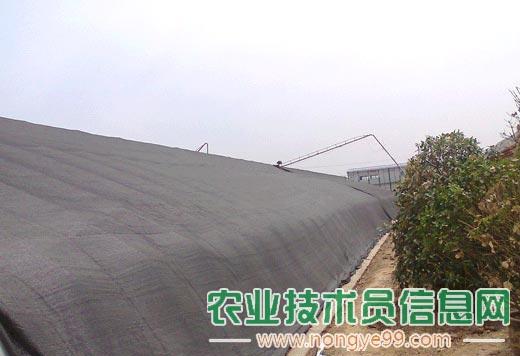 http://qn.nongye99.com/nongye/plant/da-peng-guan-li-028.jpg