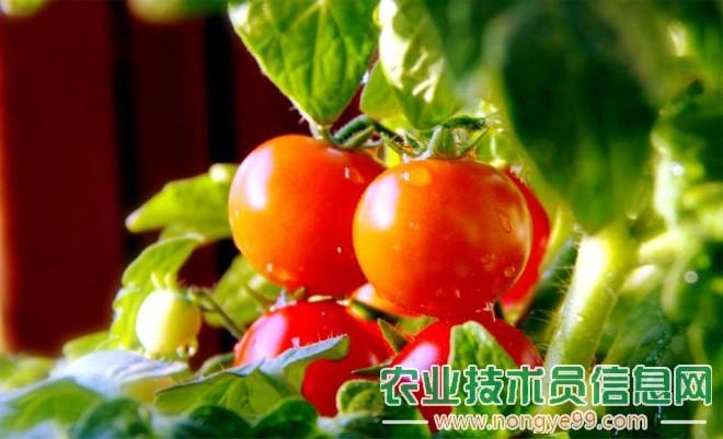 谈无公害蔬菜标准化生产
