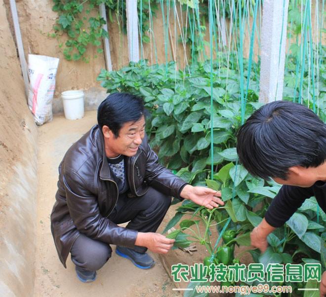 潘文兴正在指导青椒病害