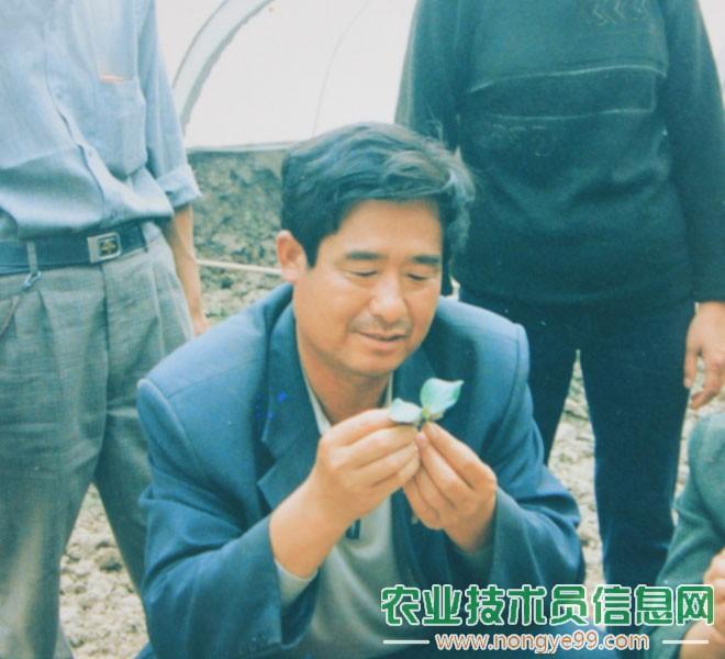 早年的潘文兴正在传授黄瓜嫁接技术