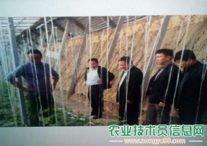 王长伟陪同阜阳市菜篮子办公室主任李标视察大棚蔬菜